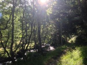 El bosque que va de Bordas de Graus a Noarre. Esta mañana.
