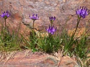 ¡Hasta en las piedras hay flores!